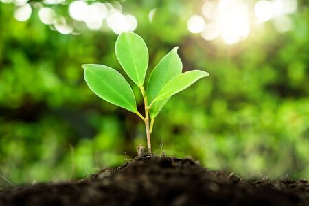 New life of young plant seedling grow in black soil. Gardening and environmental saving concept. Stock Photo