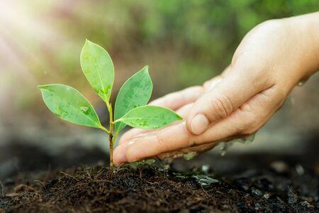 Neues Leben des Jungpflanzensämlings wächst in schwarzem Boden. Gartenarbeit und umweltfreundliches Konzept.