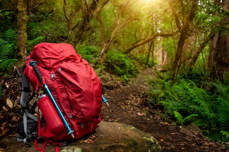 Red backpack and hiking gear set placed on rock in rainforest of Tasmania, Australia. Trekking and camping adventure. Banque d'images