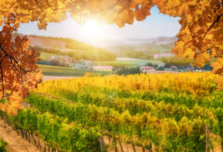 Autumn leaves with blur vineyard landscape in background. Tuscany wine. Stock fotó