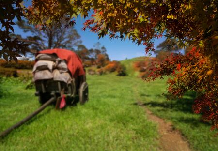 Autumn leaves with blur farm background in Transylvania, Romania. Agriculture and farming concept.