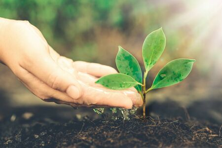 New life of young plant seedling grow in black soil. Gardening and environmental saving concept. Stockfoto