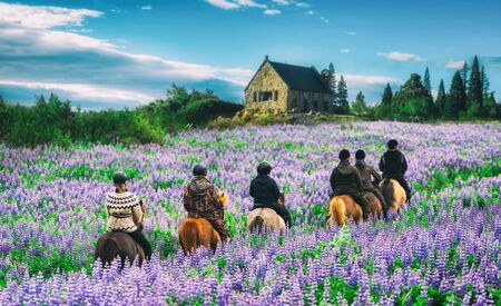 Travelers ride horses in lupine flower field, overlooking the beautiful landscape of Lake Tekapo in New Zealand. Lupins hit full bloom in December to January which is the summer of New Zealand. Фото со стока