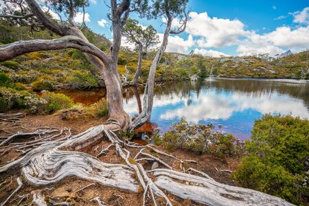 Nature landscape in Cradle mountain national park in Tasmania, Australia.