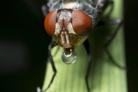 annoying: Flies cause diseases and annoying Stock Photo