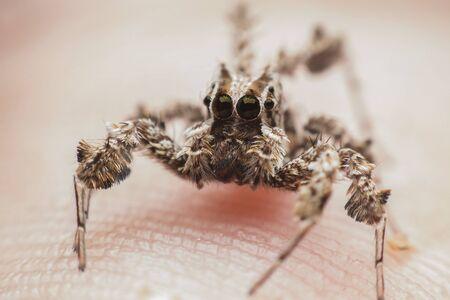 flower  crab  spider: spider