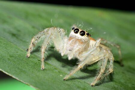 eight legged: spider