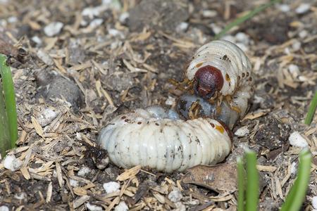 repugnant: worm