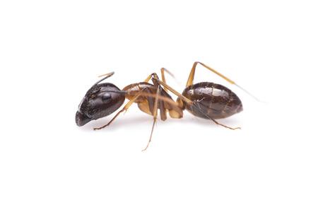 hormiga: hormiga