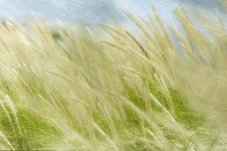 flutter: Digital watercolor : Meadow flutter in the wind. Stock Photo