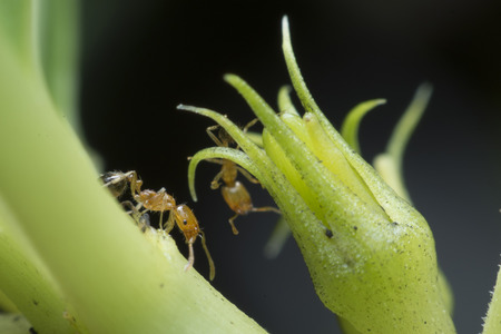 industrious: Industrious ant walking around looking for food. Stock Photo