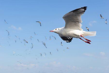 samut prakan: Escape the winter gull moving the residents living in the tropics, locations at Bang Poo, Samut Prakan, Thailand. Stock Photo