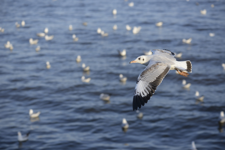 winter escape: Escape the winter gull moving the residents living in the tropics, locations at Bang Poo, Samut Prakan, Thailand. Stock Photo