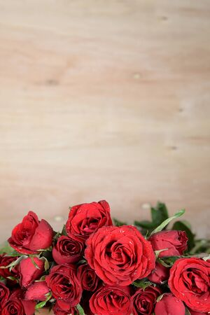 red roses: still life of concept love forever.