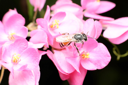 carpel: Bees feed from flowers and mix carpel.