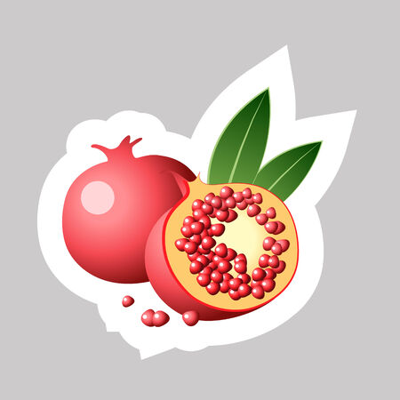 Vector Pomegranate with White Contour Isolated on Grey Background. Vector