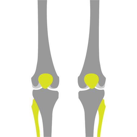 meniscus: Flat Icon of Knee on White Background. Vector Illustration