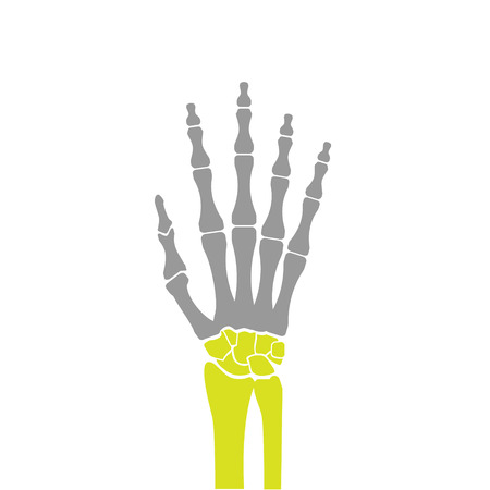 hand bones: Flat Icon of Hand Bones on White Background. Vector Illustration