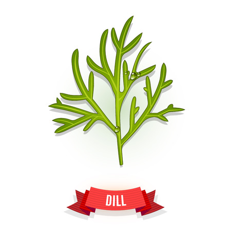 Leaves of dill. Isolated on white background. Herb with water drops. Vector illustration