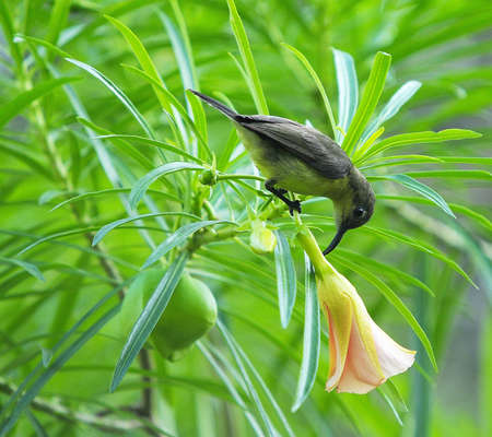 likeable: Cute bird with flower in the garden