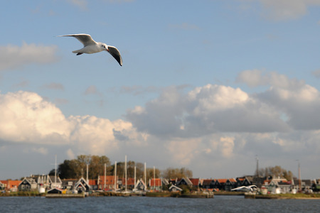 breakwaters: Seagull in Netherlands Stock Photo