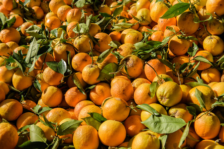 street market: Oranges sold at a street market during sunny day Stock Photo