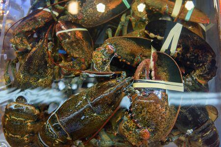 famous industries: Fresh Lobsters at Jagalchi Fish market, Busan, Korea