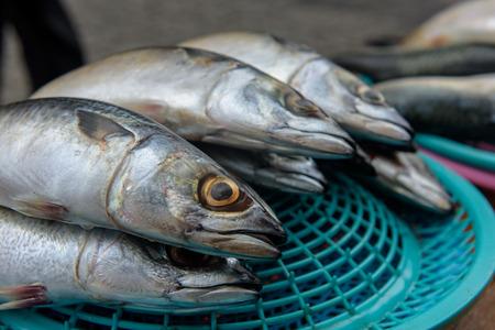 Fresh fish at Jagalchi Fish market, Busan, Korea