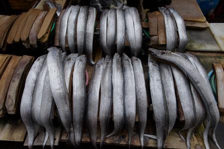 Fresh fish sold on Busan fish market