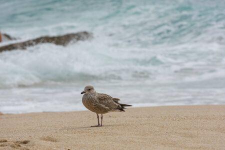 Seagull on the beach in Corwall, UK