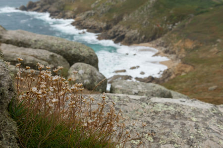 Wild flowers with a view towards the beach in Cornwall