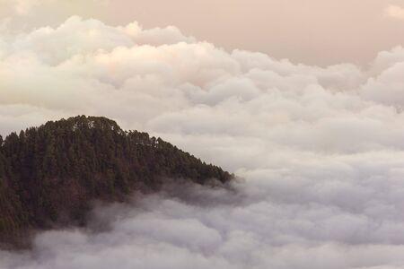 Forest above the clouds near vulcano in La Palma, Canary Islands.