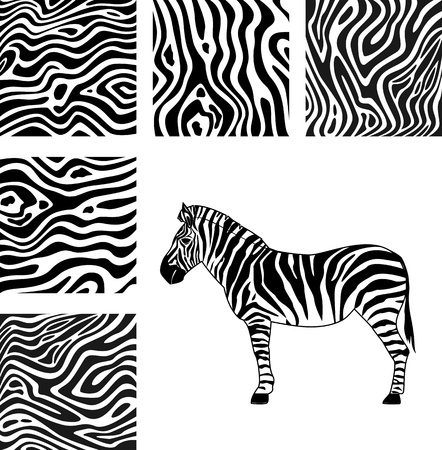 Zebra, texture of zebra Vector