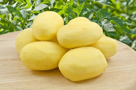 potato leaves: Peeled new potato Stock Photo
