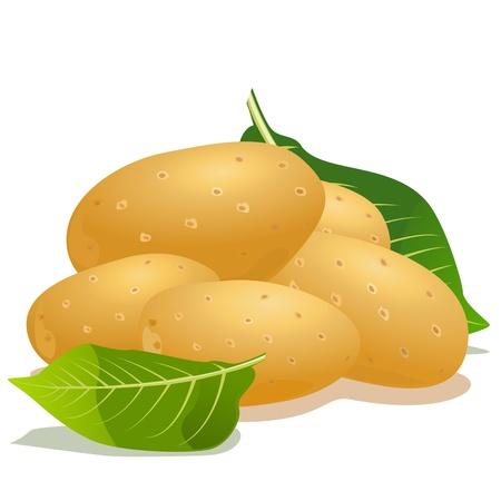 картофель: Векторные картофеля и зеленых листьев