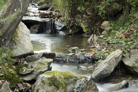Stream in the forest   photo