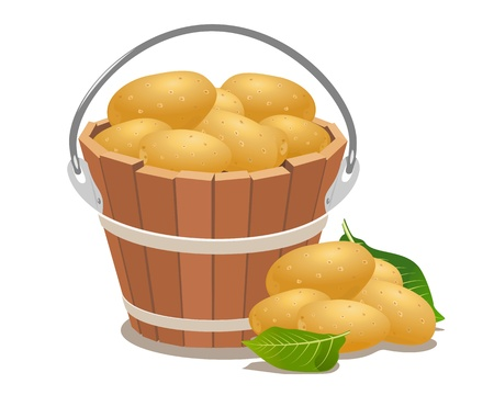 raw potato: Wood bucket full new potatoes, illustration