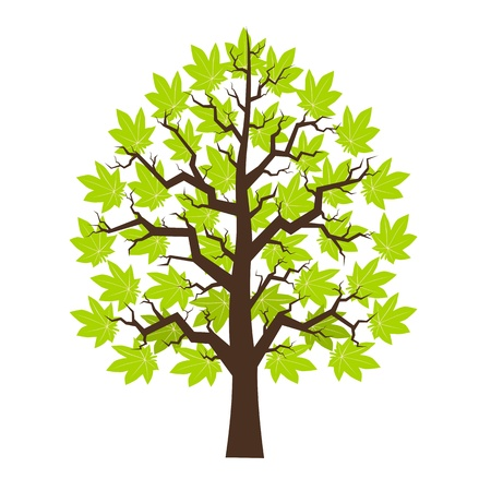 leafage: Tree maple with green leafage, illustration Illustration