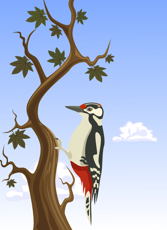 clinging: Vector woodpecker clinging to a tree trunk