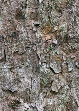 Tileable Bark Tree Texture photo