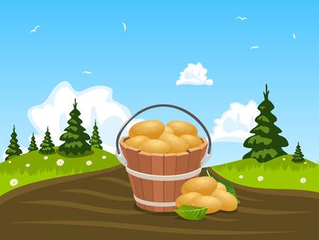 agronomic: Wood bucket full of harvested potatoes, illustration Illustration