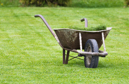 lawn grass: Old wheelbarrow on a lawn with fresh grass clippings in summer