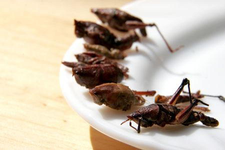 traditional mexican snack fried grasshoippers lay on white plate photo