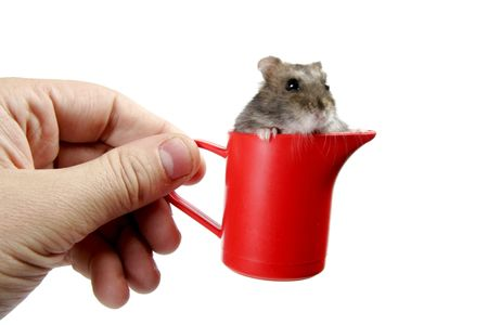 human hand hold red plastic cup with grey haster