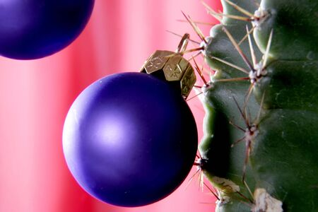 the deep blue christmas decorative ball hanging on the big cactus thorn photo