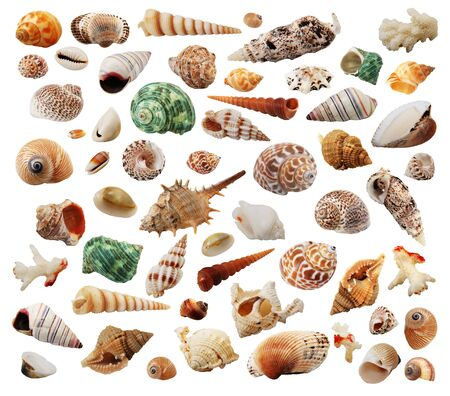 the many different sea-shells isolated on white Stock Photo - 5790520