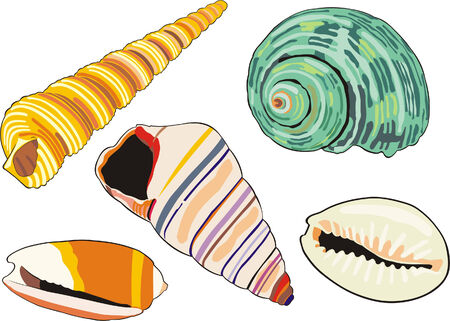 art illustration of isolated different sea-shells Illustration