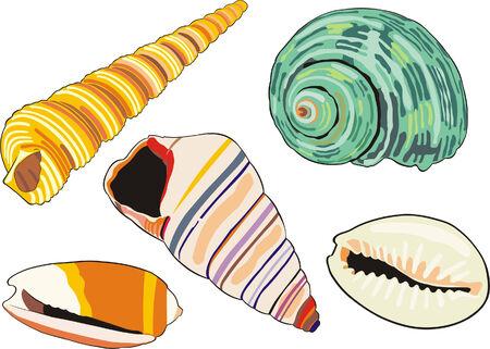 art illustration of isolated different sea-shells Illustration