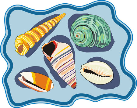 scallop shell: the art illustration of different sea shells