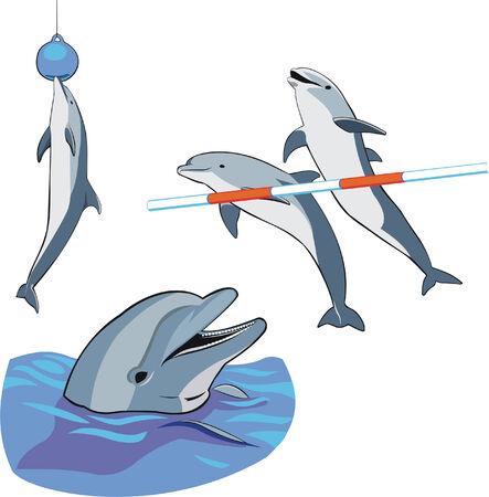 diversi i delfini saltare e posa presso la mostra